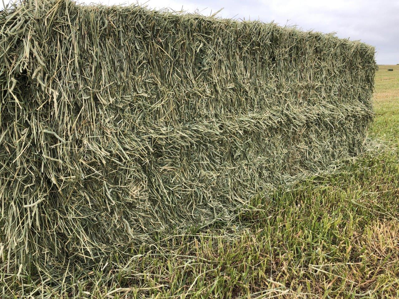 1st Timothy 第一次割刈梯牧草